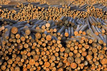 Trinciatura e Deforestazione Aree Incolte