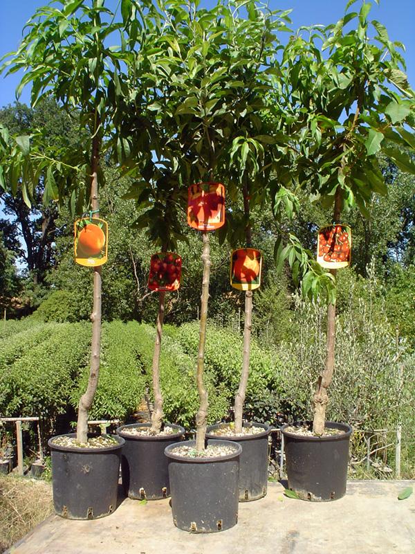 piante-da-frutto